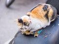 Cat is sleeping on black pad beside street, three color kitty