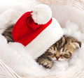 Cat sleeping on christmas Stock Images