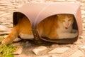Cat sleeping en una caja Imagenes de archivo