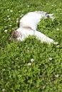 Cat sleeping on green grass Imágenes de archivo libres de regalías