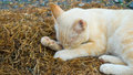 The cat sleeping on hay Royalty Free Stock Photo