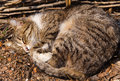Cat sleeping persian on the ground at a sunny day Stock Photos