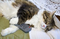 Cat sleeping with remote control. Royalty Free Stock Photos