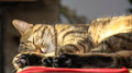 Cat sleeping in the sun Royalty Free Stock Photo