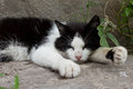 Cat sleeping tired black and white outdoor during the day Stock Image