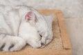 Cat sleeping white on mat Stock Images