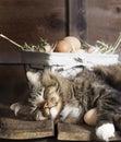 Cat Sleeping on Wood Shelf with Eggs