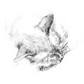Cat sleeps charcoal artistic illustration of a beautiful sleeping siamese Royalty Free Stock Photography