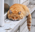 Cat sleeps red haired adult lies on a windowsill Royalty Free Stock Photo