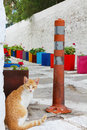 Cat on small street a beige sitting a with many flowerpots Royalty Free Stock Photo
