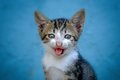 Cat With Smiling Face and Cute Expresion Royalty Free Stock Photo