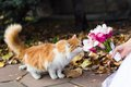 Cat sniffing flowers Stock Images