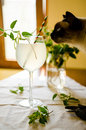 Cat sniffing lemonade in glass with honeysuckle flowers and mint Stock Image