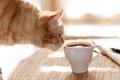 Cat sniffs mug of coffee Royalty Free Stock Photo