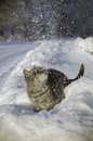 Cat in the snow is on the snowdrift a Stock Images