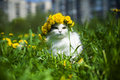 Cat spring fluffy walks in the grass Stock Images