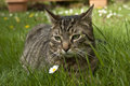 Cat in spring grass house lying Stock Photo