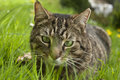 Cat in spring grass house lying Royalty Free Stock Image