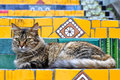 Cat on stairs lazy the escadaria selaron in rio de janeiro Royalty Free Stock Image
