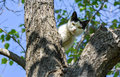 Cat Standing On Tree And Looki...