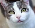 Cat staring Lizenzfreie Stockbilder