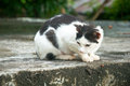 Cat staring wary at the street black an white alley Royalty Free Stock Images