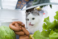 Cat steals sausage from the refrigerator Royalty Free Stock Photo