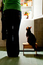 Cat stool and fridge hungry waiting for a meal refrigerator emit bright light feeding time Stock Photography