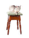 Cat on a stool isolated white background Royalty Free Stock Photos