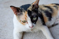 Cat stray cats and stray cats as pets of human beings is very probable that the was fed to humans Stock Photography