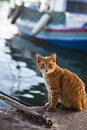 Cat stray sitting by the aegean sea in greece Stock Image