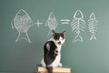 Cat studying arithmetic Royalty Free Stock Photo