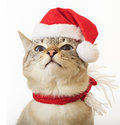 Cat in a suit of Santa Claus. Stock Photography