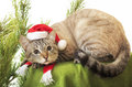 Cat in a suit of santa claus funny Stock Images