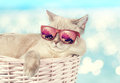 The cat in sunglasses lying in a basket Royalty Free Stock Photo
