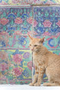 Cat & Sweet wall Royalty Free Stock Photo