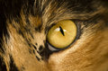 A cat t eye an of my wife s Stock Photography