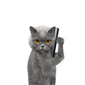 Cat is talking over the mobile phone Royalty Free Stock Photo