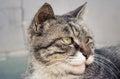 Cat 3 Royalty Free Stock Photo