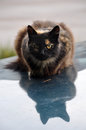 Cat on top of a car portrait an adult spotted multicolor cats sits Stock Photos
