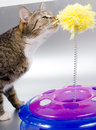 Cat and toy curious plastic Royalty Free Stock Images