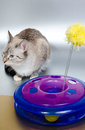 Cat and toy cute plastic Stock Images