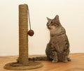 Cat with toy fun Stock Photos