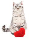 Cat with toy heart. Royalty Free Stock Photo