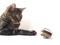 Cat with toy over white backgroun Royalty Free Stock Photos