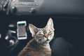 Cat is traveling in a car Royalty Free Stock Photo