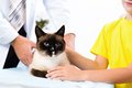 Cat on the treatment by a veterinarian next girl holding Royalty Free Stock Image
