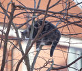 Cat in a tree Royalty Free Stock Images