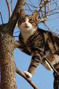 Cat on a tree  Stock Image