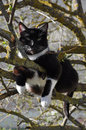 Cat on the tree black and white climbed and rest Stock Photos